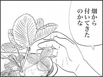 kfc01957-5