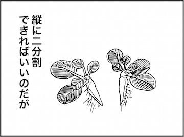 kfc01976-4
