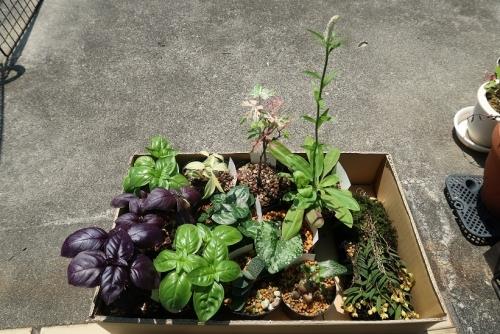 買ってきた植物達