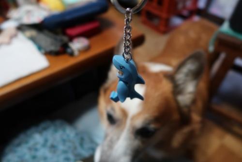 サメ君とカイロ♪