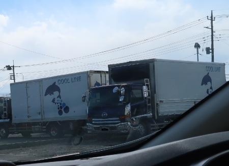 イルカのトラック