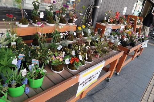 お花売り場