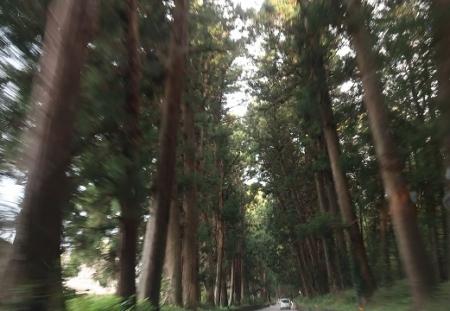 栃木杉並木