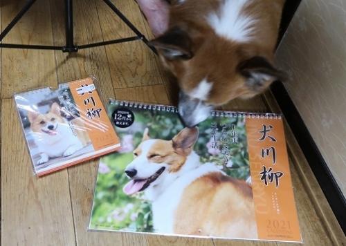 コギとコギ川柳カレンダー