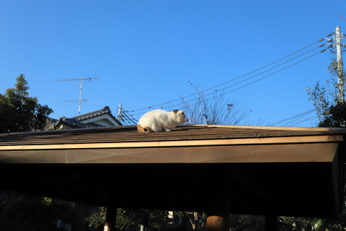 屋根のくるりん