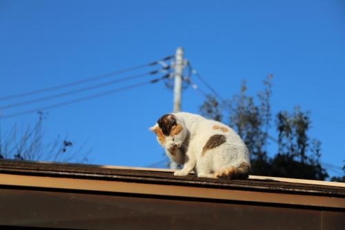 屋根のくるりん2