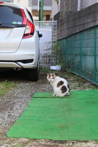 バンダナ猫2