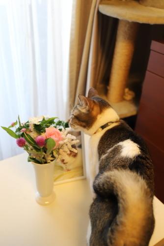 花とナッツ