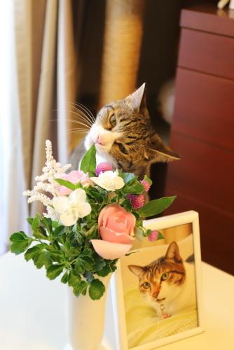 花とレイ2