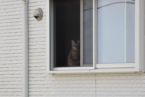 窓辺のキジトラ