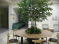 ホスピタリティの木