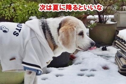 積雪 10