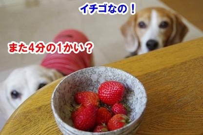 イチゴ祭り 1
