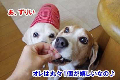 イチゴ祭り 4