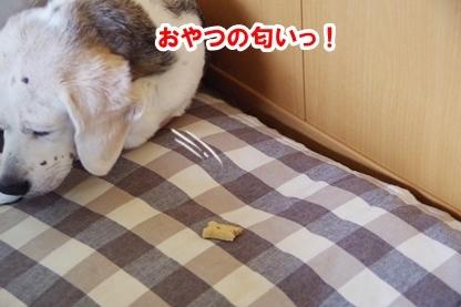 がんばれ 6