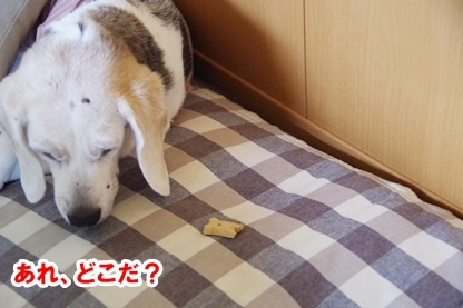がんばれ 7