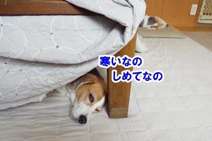 寒がり 2