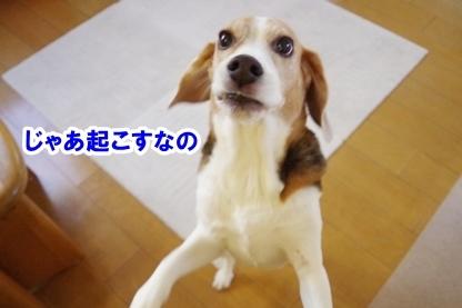 姉ちゃん 2