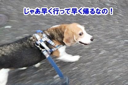 秋散歩 2