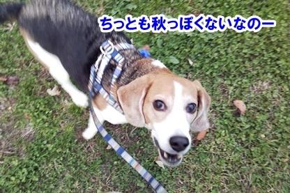 秋散歩 3