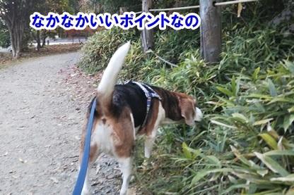 秋散歩 4