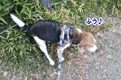 秋散歩 5