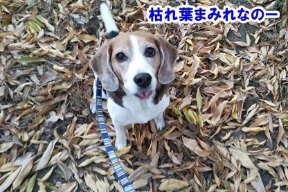 秋散歩 6