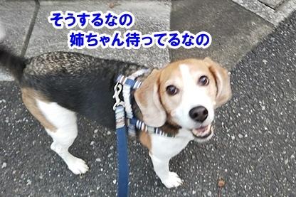 秋散歩 7