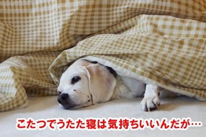 安眠のために 1