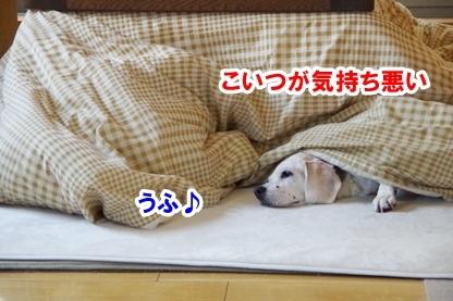 安眠のために 2