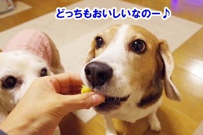 芋比べ 8