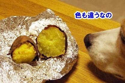 芋比べ 6