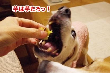 芋比べ 7