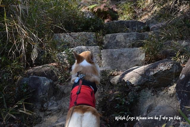 岩場をトントン登ってね