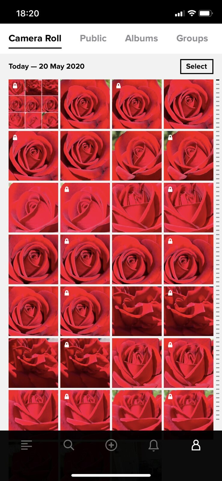 Wall of the red roses