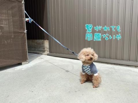 fc2blog_2020042121470592c.jpg