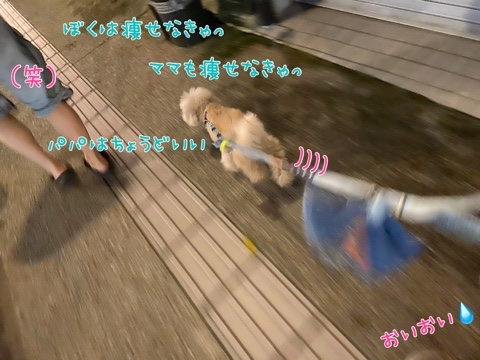 fc2blog_202006262044112d9.jpg