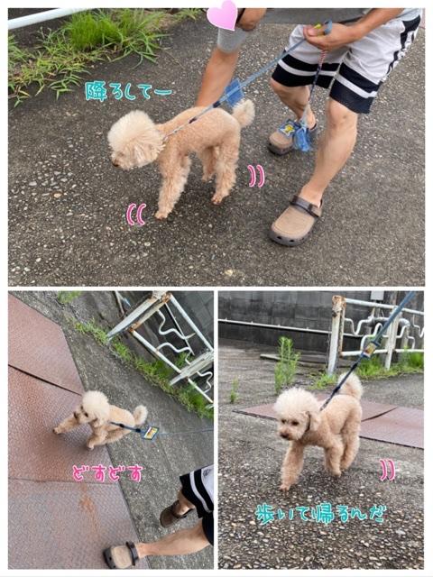 fc2blog_20200725203240ade.jpg