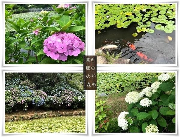 健康の森06221-tile