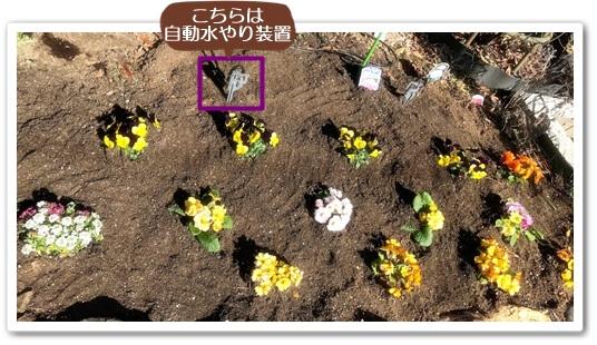 花苗を植えました0211