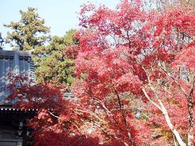 hachioji338.jpg