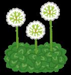 flower_shirotsumegusa_20200526131130ec8.png