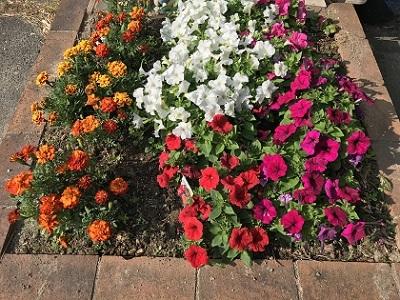 老人会の花壇