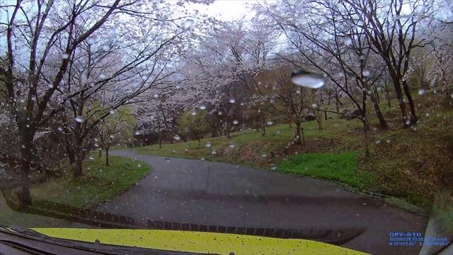 仲哀公園の桜-3