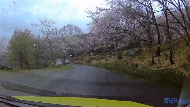 仲哀公園の桜-1