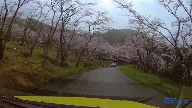 仲哀公園の桜-5