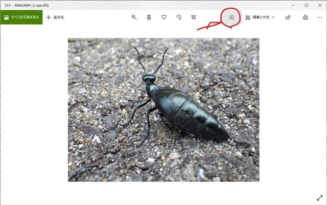 ヒメツチハンミョウ 画像で検索