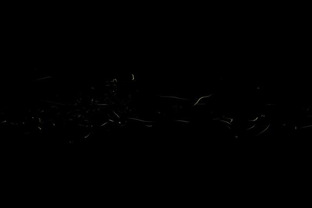 蛍の光跡-4