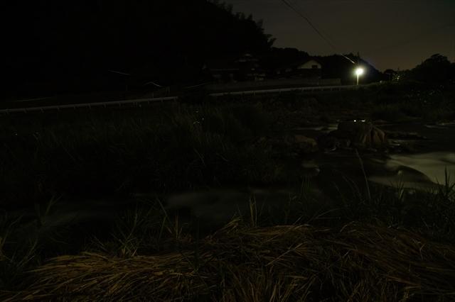 木井馬場の蛍