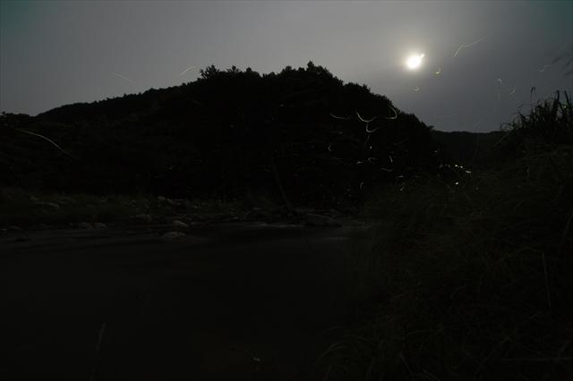 伊良原ダム下流の蛍